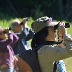 Weekly Birding at The Mount @ The Mount