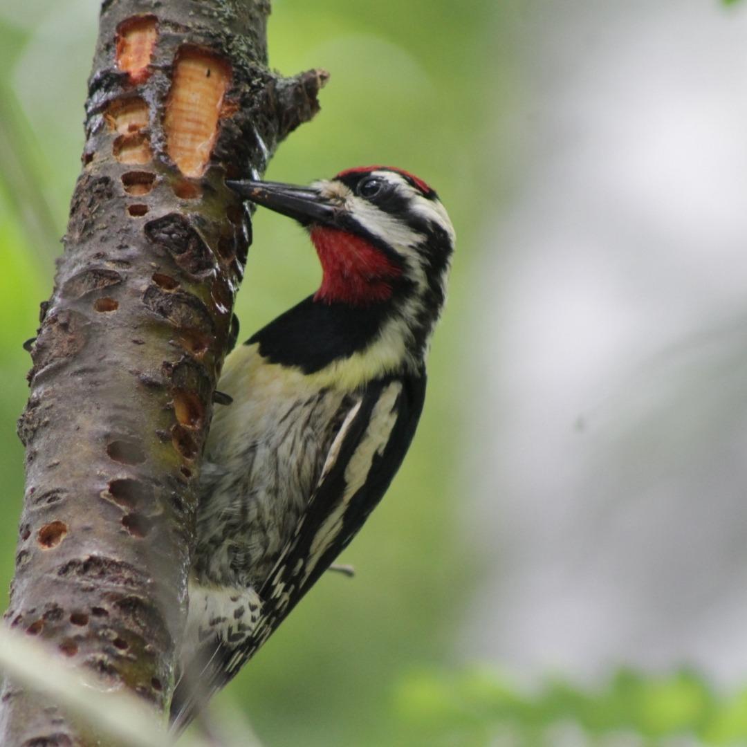 Spring Bird Walks with Mass Audubon